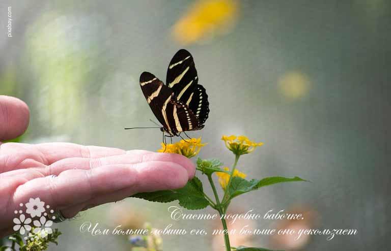 Цитаты про бабочек и счастье