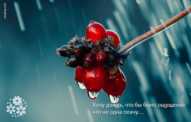 Статусы про дождь и грусть