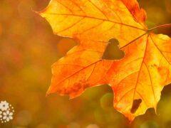 По струнам счастья бродит осень. Красивые статусы про осень