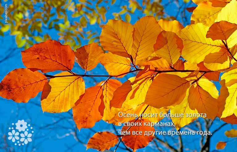 Красивые статусы про золотую осень