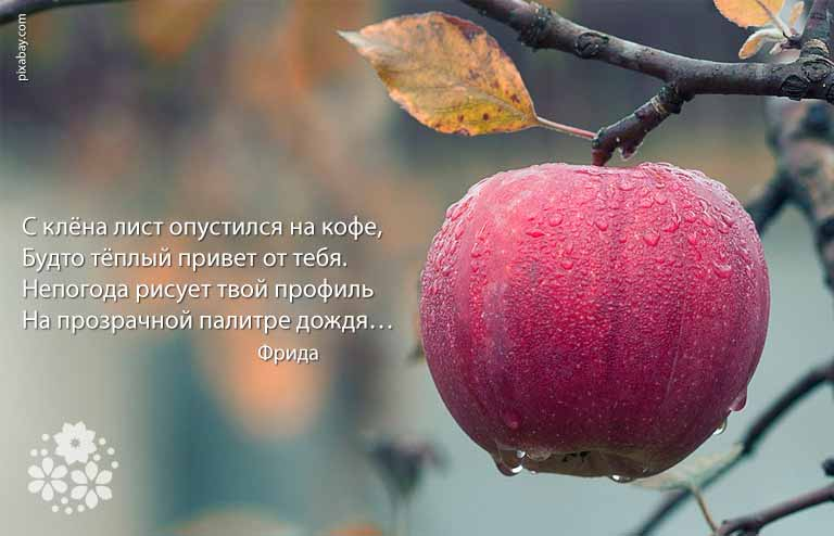 Красивые до слез статусы про осень и любовь