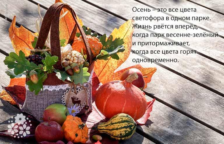 Красивые статусы про осень и жизнь