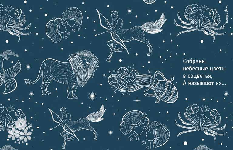 Загадки про Полярную звезду и созвездия