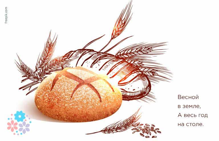 Загадки и пословицы про хлеб для детей 5-6 лет